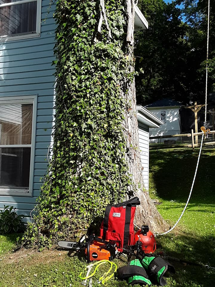 Bay Tree Removal Service - Hayward CA