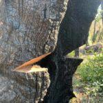Tree Removal   Hayward CA
