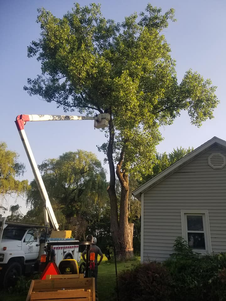 Tree Trimming Service in Hayward CA