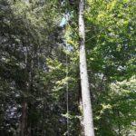Tree Service in Hayward CA