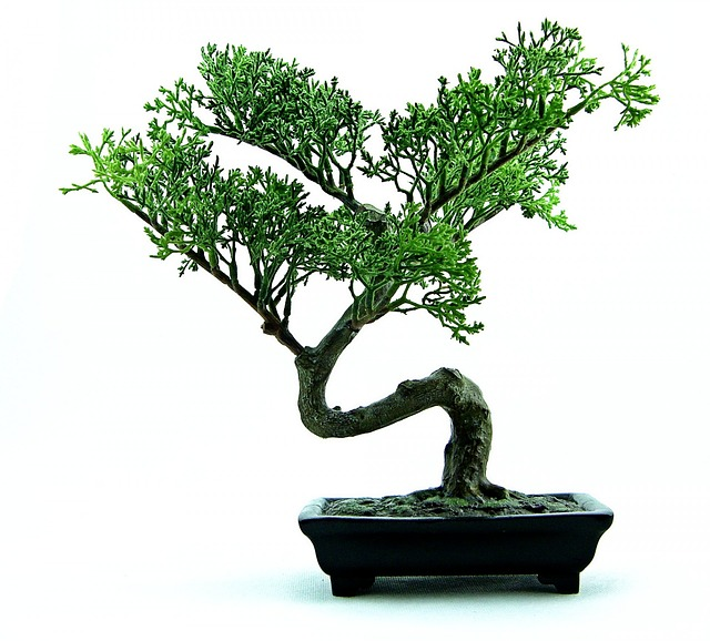 Re potting Bonsai