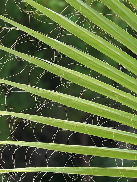 Fan Palm Growing Simplified