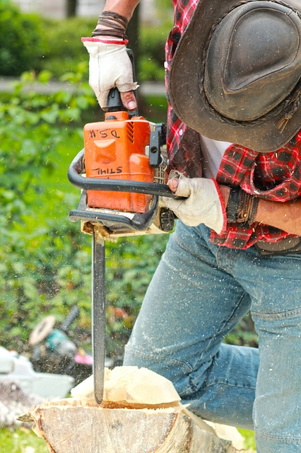 Tree removal service San Leandro