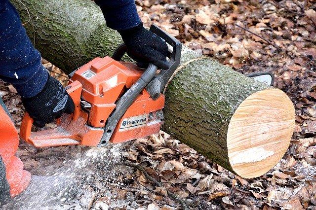 Tree removing San lorenzo valley