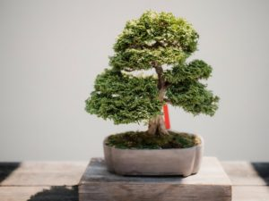 Mistakes People Make When Trimming A Tree