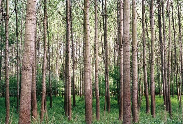 Ashland Tree Service