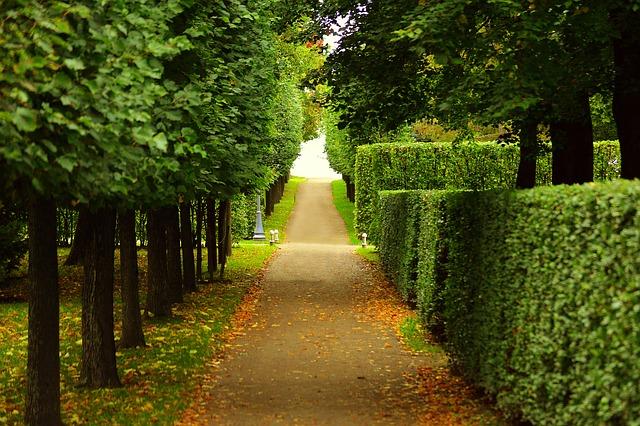 Dwarf hedges and parterres